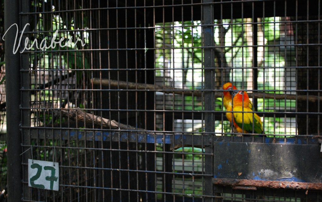 kissing-at-cage-27-wildlife